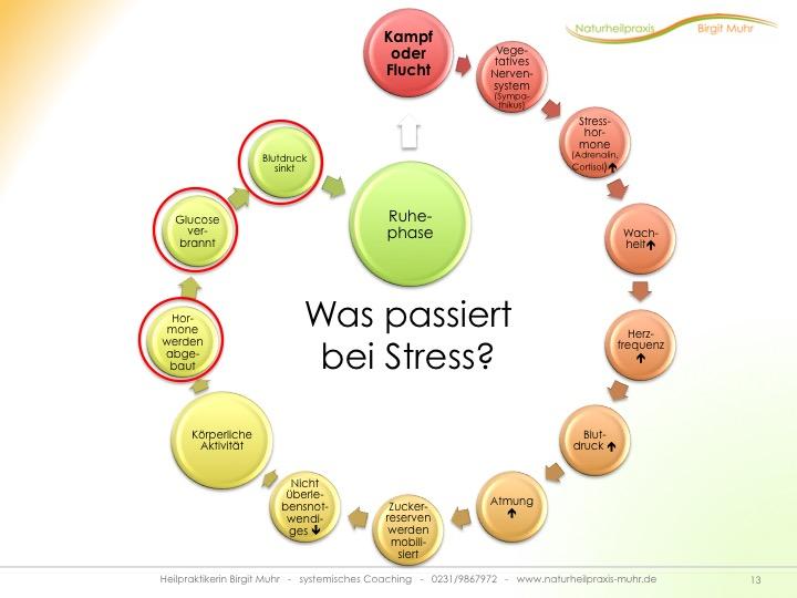 Stress Folgen
