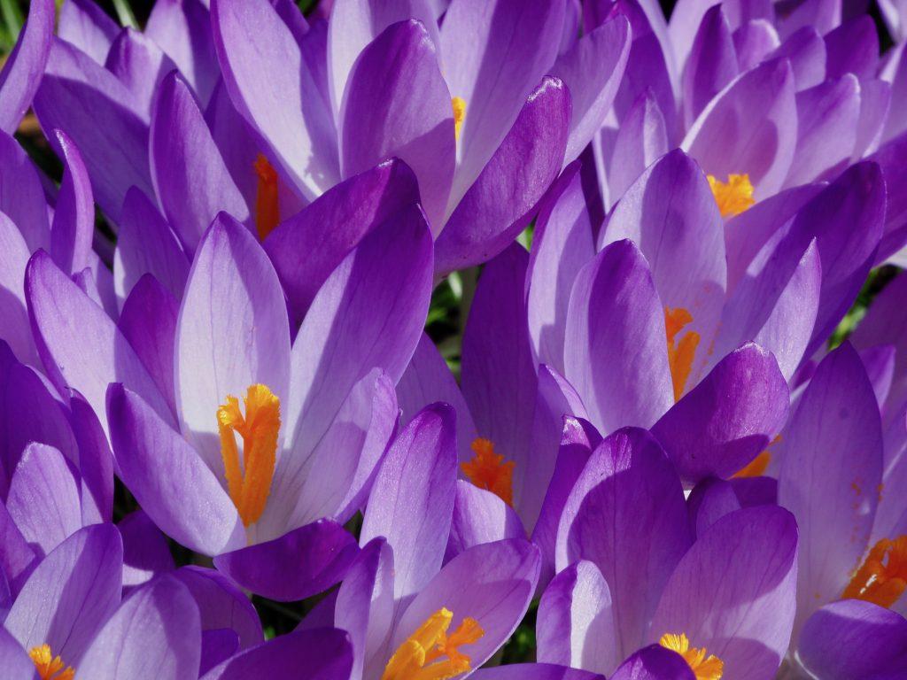 Frühjahr: perfekte Zeit um das Bindegewebe zu entgiften!