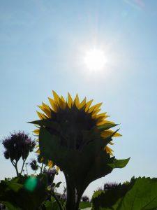 Sonnenhormon Vitamin D