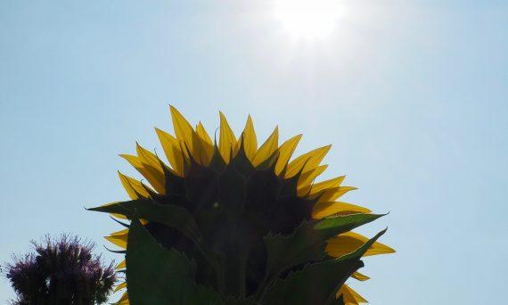 Sonnenschein im Sommer ist Voraussetzung für die Bildung von Vitamin D