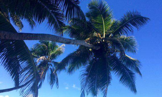 Kokosöl: nur tödlich wenn einem die Nuss auf den Kopf fällt...