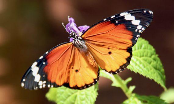 """Jodmangel: nicht nur katastrophal für die Schilddrüse (das """"Schmetterlingsorgan"""")"""