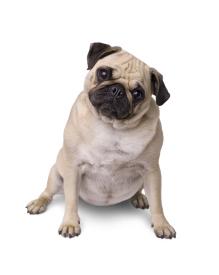 Hormonstörungen, oder warum werden wir immer dicker und kränker? (Foto © OxfordSquare/Shotshop.com)