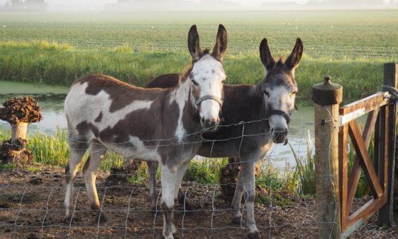 Umwelthormone: sind wir bald dümmer als die Esel?