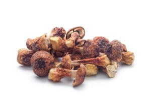 Agaricus blazei mushroom (koosen/Shotshop.com)
