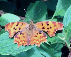 """Schilddrüse: das """"Schmetterlingsorgan"""""""