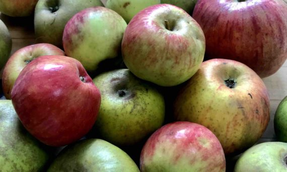 Quercetin in der Apfelschale